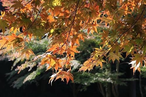 Kamakura1810_x500.jpg
