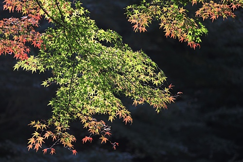 Kamakura1822_x500.jpg