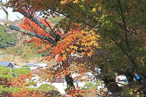 Kamakura1838_x500.jpg