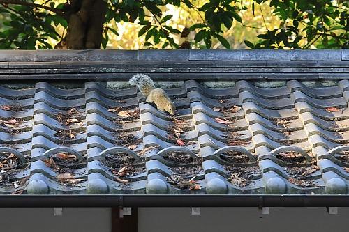 Kamakura1847_x500.jpg