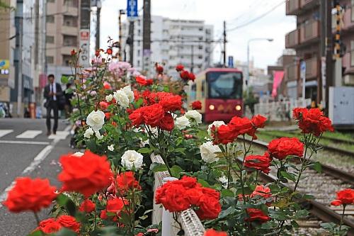 rose1910_x500.jpg